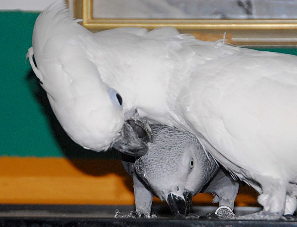 Rudi und Robin :-)