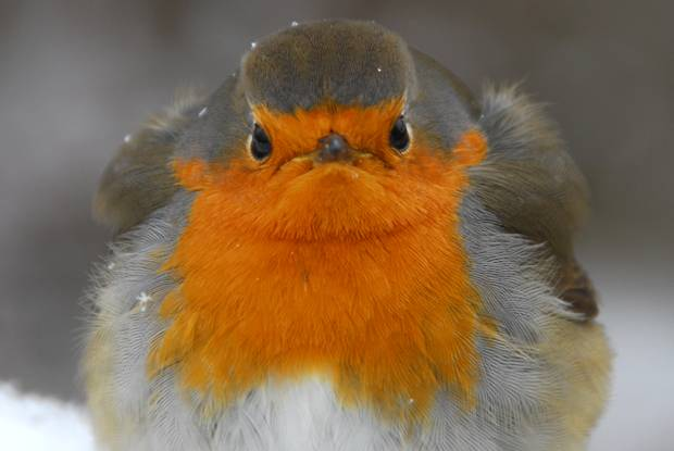 Einheimische Vögel :-)