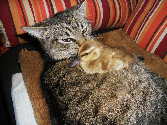Katzen :-)