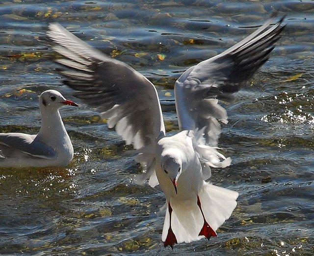 Wasservögel :-)