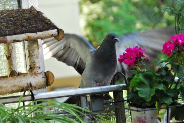 Auch Tauben sind Meine Freunde :-)